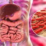 Was sind wirksame Mikroorganismen?